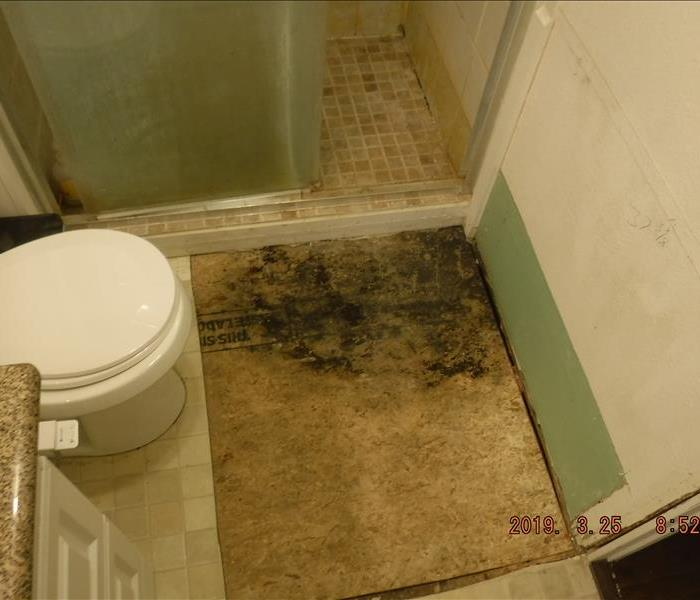 Floor with large black mold spot
